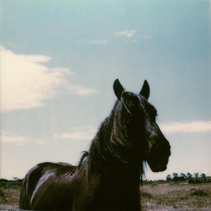 Polaroid SX-70 horse