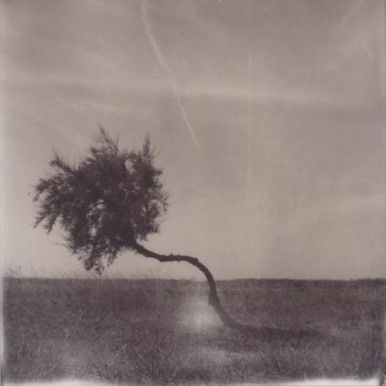 Polaroid SX-70 Ile de Ré