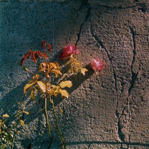 Analog photography ARTgentique Vincent Delsupexhe