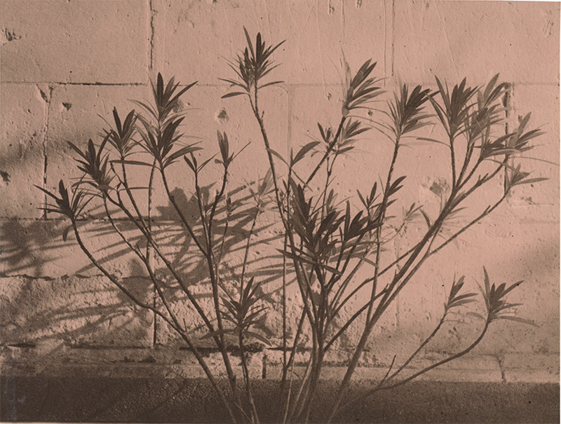 Analog photopraphy lith wetprint