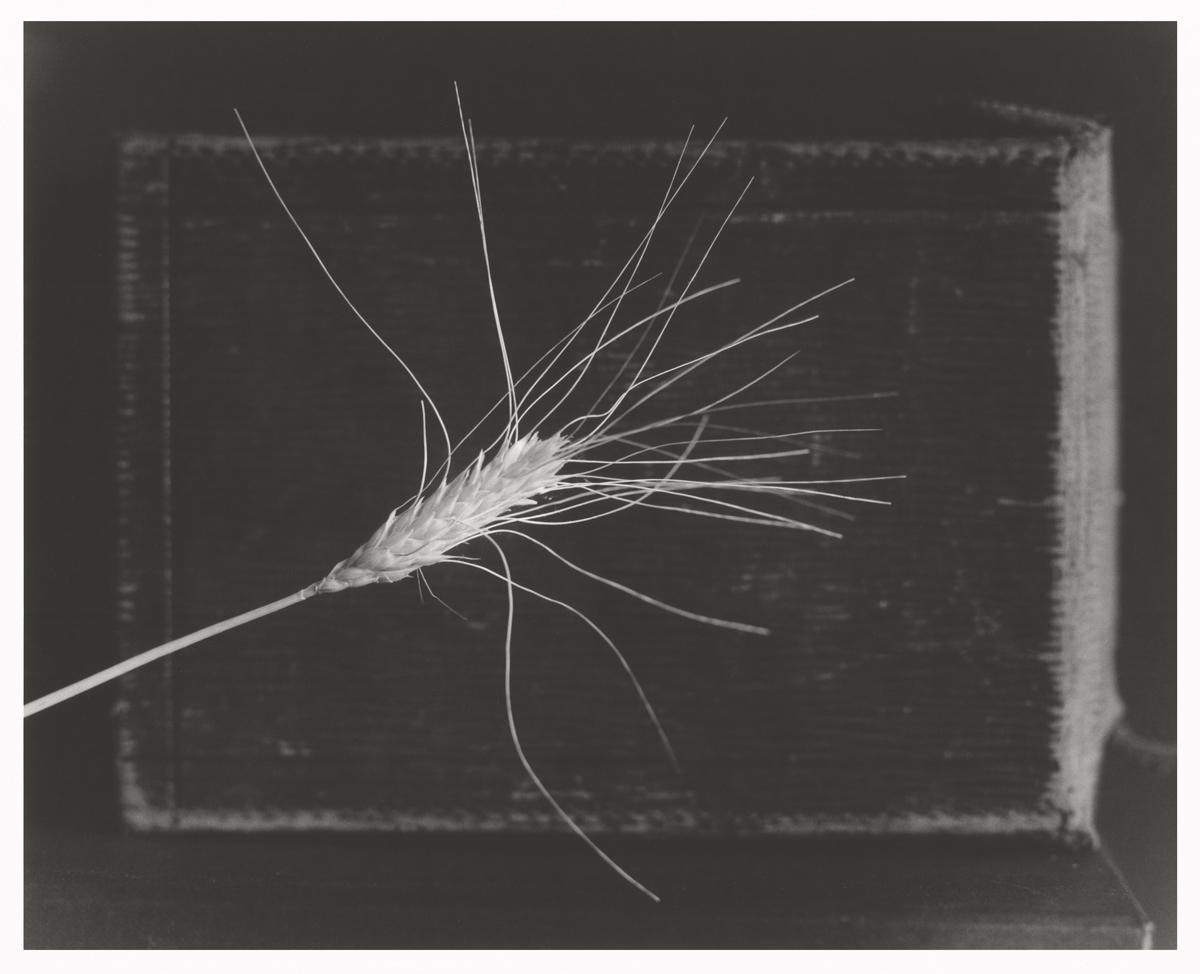 Analog photopraphy BW wetprint