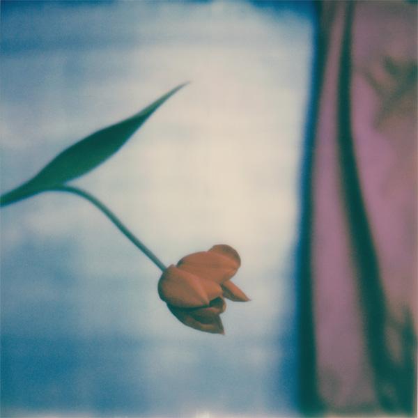 Polaroid sx-70 ARTgentique Vincent Delsupexhe